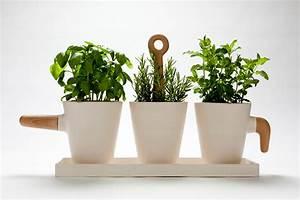 Come coltivare l'orto in casa senza balcone o terrazzo greenMe