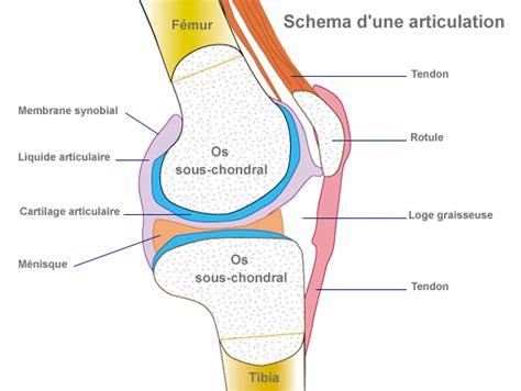 douleur al interieur du genou le rhumatologue est un m 233 decin sp 233 cialiste des articulations des muscles et des tendons