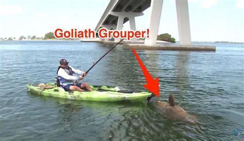 kayak grouper goliath saltstrong fishing alone