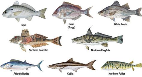 Boat Registration Requirements In Washington State by Marine Species Identification New Jersey Saltwater