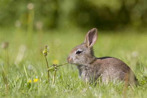 safe wood   plants  rabbits