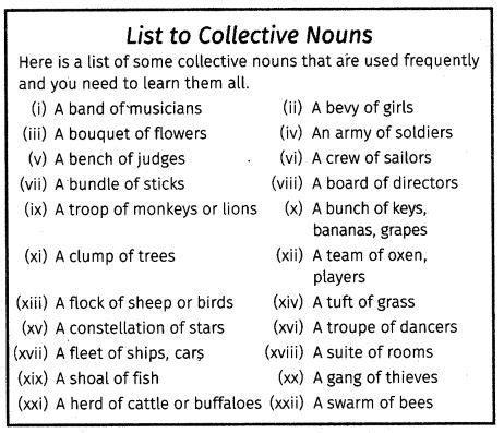 cbse class  english grammar noun nouns collective