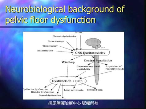hypertonic pelvic floor disorder ppt the spastic sphincter powerpoint presentation id