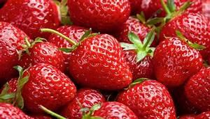 Erdbeeren Pflanzen Die Wichtigsten Tipps : erdbeeren pflege erdbeeren pflanzen pflege und ernte ~ Lizthompson.info Haus und Dekorationen