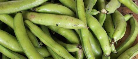 cuisiner des feves seches les fèves histoire qualités et cuisine des fèves