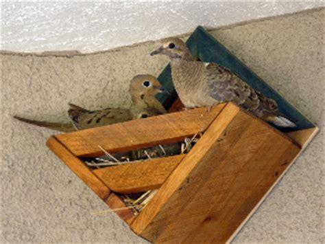 great dove bird house