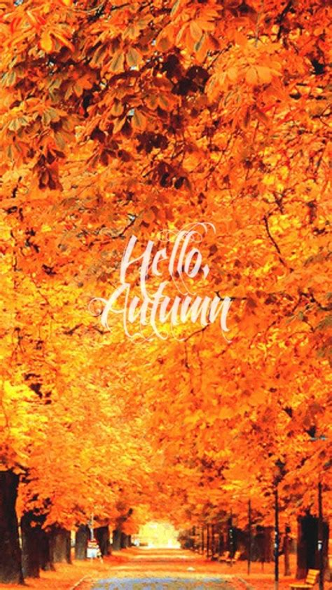 Autumn Wallpaper Iphone 8 Plus by Free Fall Wallpaper For Phone 8 Free Autumn Inspired