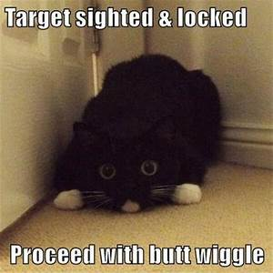 30+ Funny Cat Pictures with Captions | FallinPets