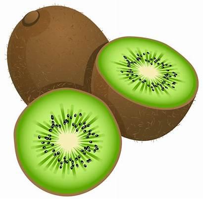 Kiwi Fruit Clipart Clip Painted Frut Fruits