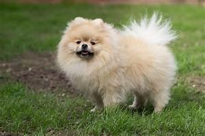 Top 10 Cuddly Fluffy Dog Breeds