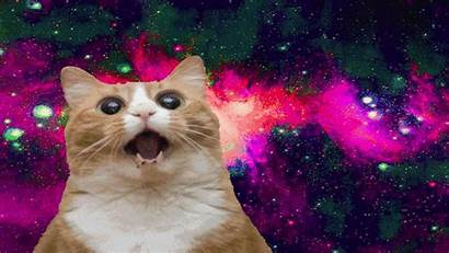 Crazy Cat Cats Ugly Wallpapers Backgrounds Wallpaperaccess