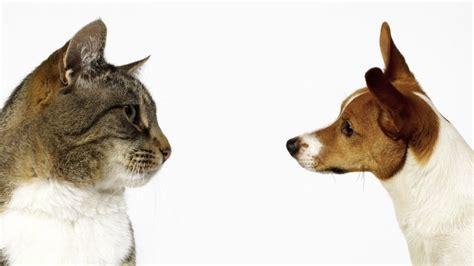 weltkatzentag  hunde oder katzen welche sind die
