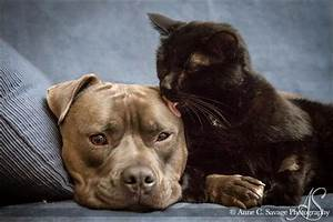 Break When Cats And Dogs Lay Together Kiss Eclectablog Cat ...