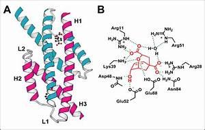 Biochemistry - Enzymatic Error Rate