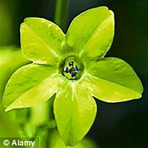 Splash of lime Vibrant lime green flowers look delightful