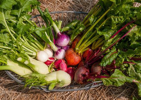 Roasting Summer Vegetables  Lopez Island Kitchen Gardens