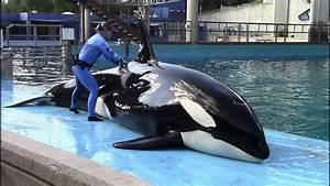 Orca Care  U0026 Research  Inside Look 2018 At Seaworld San