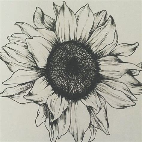 sunflower drawing pic drawing skill