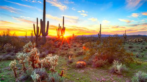 saguaro park national arizona states united