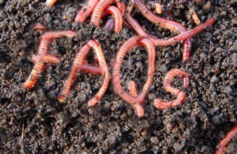 wiggler worms worm feed composting foods compost castings wigglers