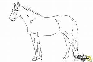 How to Draw a Realistic Horse | DrawingNow