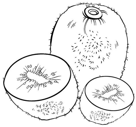 Kleurplaat Fruit Kiwi by Kiwi Fruit Coloring Pages For Children