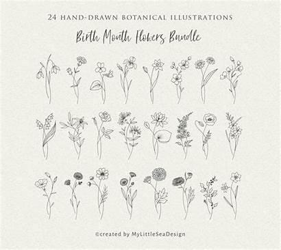 Svg Birth Month Flowers Floral Clipart Bundle