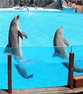 Décision Du Conseil D état : orques et dauphins en captivit cette d cision du conseil d etat scandalise ~ Medecine-chirurgie-esthetiques.com Avis de Voitures