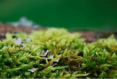 Mossy Favourites