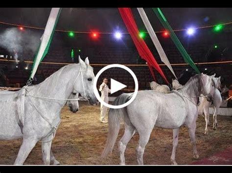 cirkuszcsillagok lovasokhu lovas videok