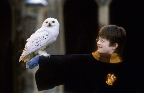 Harry Potter Wallpaper Hedwig Owl by Owl Harry Potter Wiki