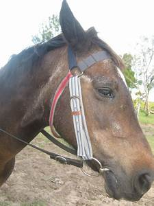 Belt Horse Bridle - petdiys.com