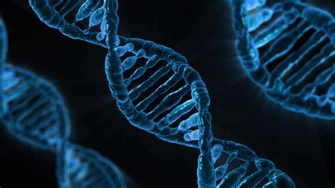 Exploring Genetic Causation in Biology