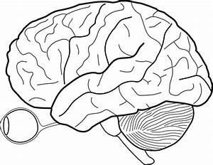 Brain Eye Outline Clip Art At Clker Com