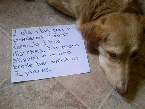 puppy diarrhea puppy diarrhea