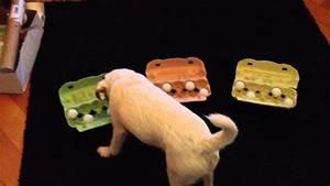 Hunde Intelligenzspielzeug Selber Machen : hund und selbstgebasteltes intelligenzspielzeug youtube ~ A.2002-acura-tl-radio.info Haus und Dekorationen