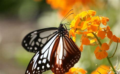 paesaggi categoria farfalle foto farfalle programmi giochi trucchi windows