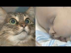Homeless Cat Saves Abandoned Baby