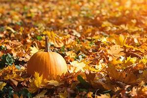 Orange, Pumpkin, On, Autumn, Leaves, Background, Autumn, Card, With, Pum, U2013, Access, 2, Interpreters