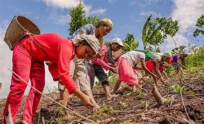 Indigenous Upland Rice Farmers Planting Burn Slash