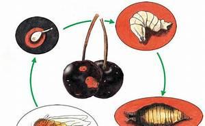 Rosenrost Was Tun : 146 best pflanzenschutz images on pinterest crop ~ Lizthompson.info Haus und Dekorationen