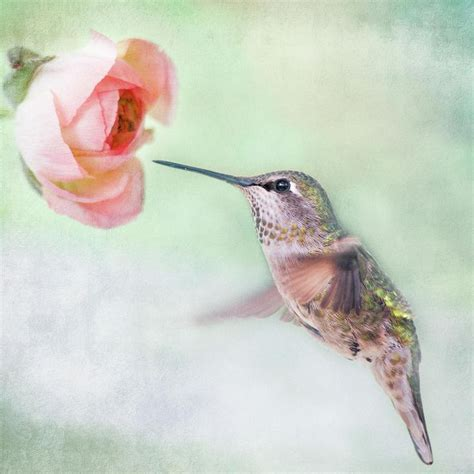 78 best images about hummingbirds on pinterest bottle