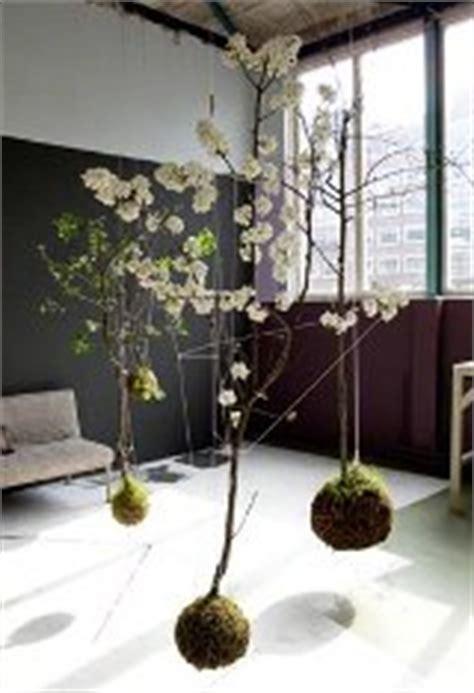 piante d arredo per interni piante da interno