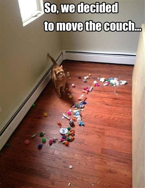 hilarious struggles  cat owners  understand