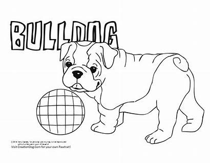 Bulldog Coloring Puppy Dog Pages Printable American