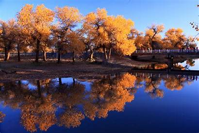 Reflection Trees Autumn Water Nature Wallpapers Waters