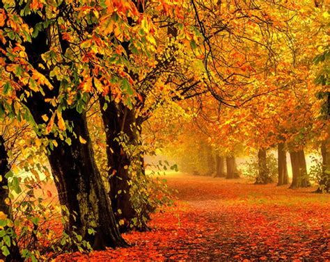 Autumn's Market Comment 2019: Autumn Leaves us Guessing ...