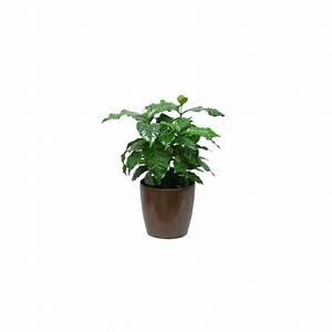 Cache Pot Plante : caf ier 30 cm cache pot bronze plantes et jardins ~ Teatrodelosmanantiales.com Idées de Décoration