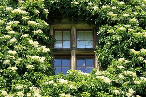 30 Shrubs That Grow In Shade