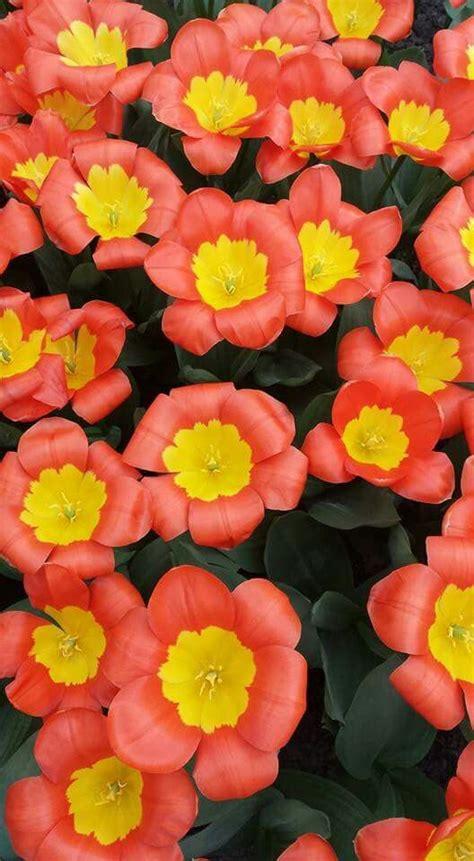 Colores de primavera Colores de primavera Flores Girasoles